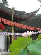 1007 Nanjing 012