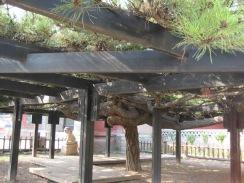 100817 Tian Long Shan 022
