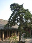 100817 Tian Long Shan 028