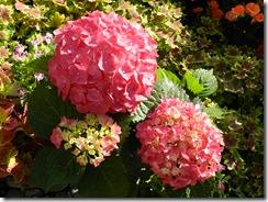 110421 Taipei Floral Expo 044