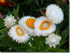 110421 Taipei Floral Expo 096