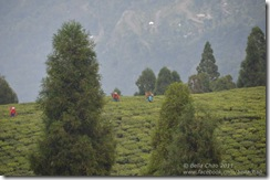 111101 Sikkim 030