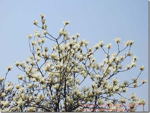 1203 Shanghai flowers 002