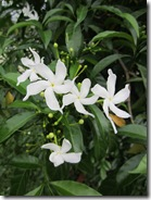 120911 Rajpur flowers 002