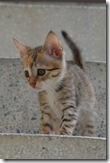 120825 Ngor kitty 052
