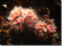 121221 Monterey Acqarium 002