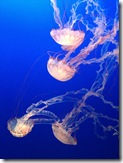 121221 Monterey Acqarium 006